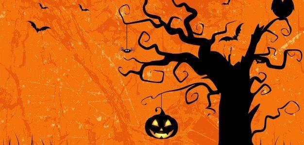 Les autruches aussi fêtent Halloween !